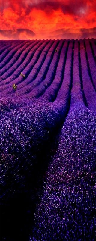 Incredibly Sublime Places to Travel to this Winter Sunset in lavender fields France