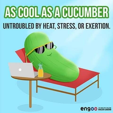 """Выражение дня - """"as cool as a cucumber"""" (спокойный как удав)."""
