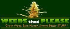 Marijuana Indoor Growing Tips & Seeds | Buying Cannabis Seeds Online