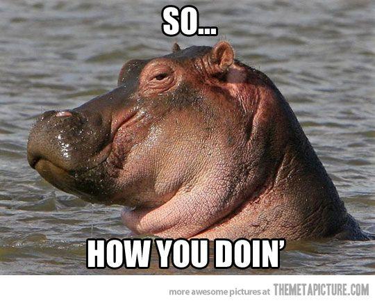Suave Hippo