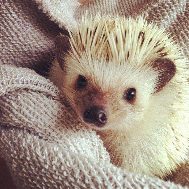 Hedgehogs Join Puppy Bowl IX | POPSUGAR Pets