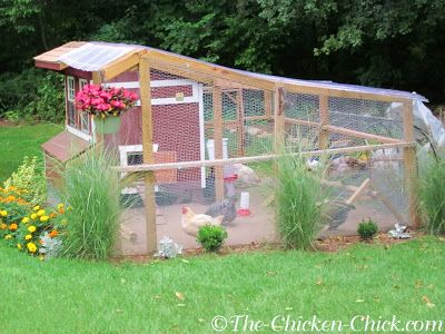 If you have the space #backyardchickens
