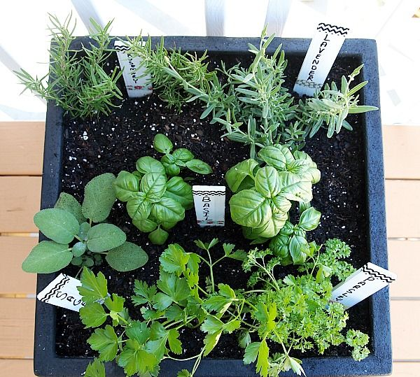 Great tips for planting a one pot herb garden & DIY washi tape plant markers #herbs