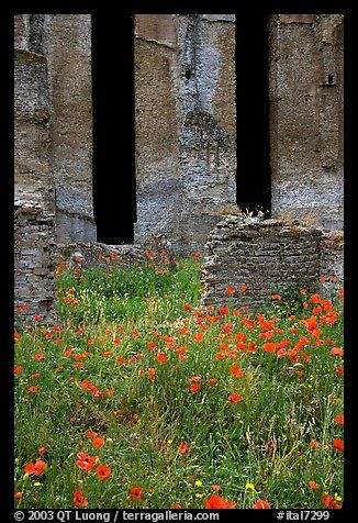 Photographs by QT Luong  Red poppies and ruins of the Praetorium, Villa Hadriana. Tivoli, Lazio, Italy (color)