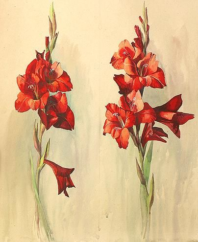 Gladioluses flower - watercolor painting