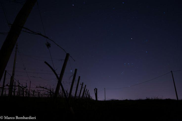 Vineyard by Marco Bombardieri on 500px