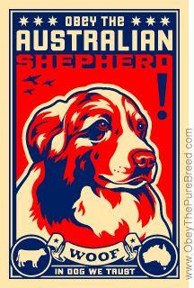 """""""Obey the Australian Shepherd!"""""""