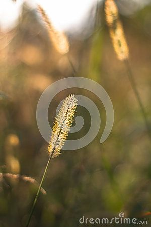 Summer floral bokeh with grass