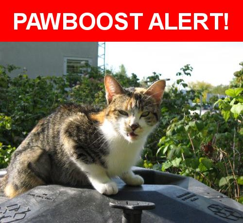 Please spread the word! Moma Kitty was last seen in Cohasset, MN 55721.    Nearest Address: Near Co Rd 227, Cohasset, MN