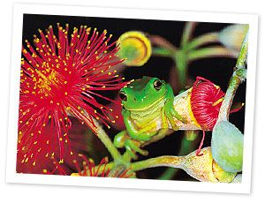 Attracting wildlife to your garden. Includes a PDF of Australian plants to attract native bees.