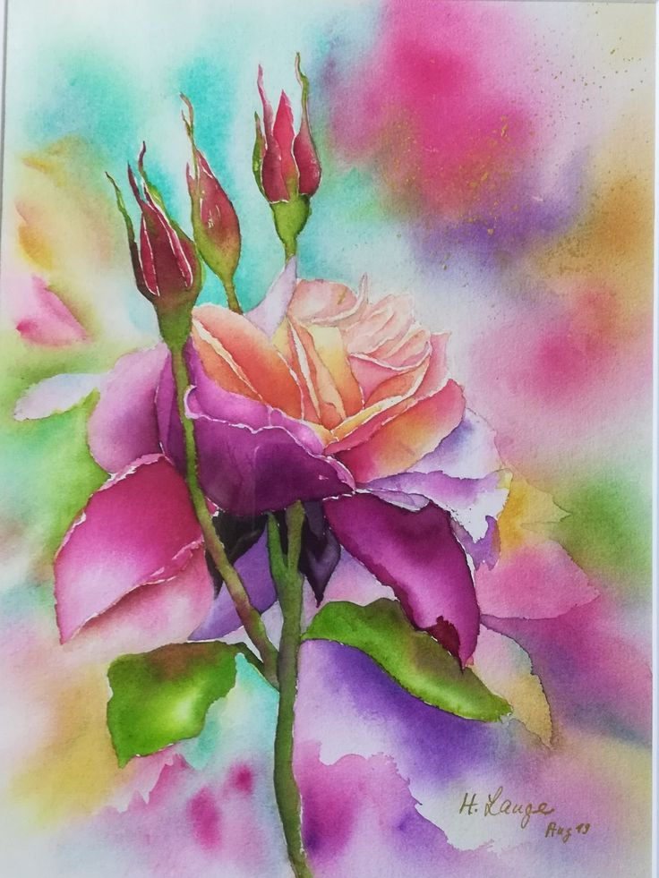 Pink Roses Watercolor Roses Watercolor Aquarell Der Rosa Rosen