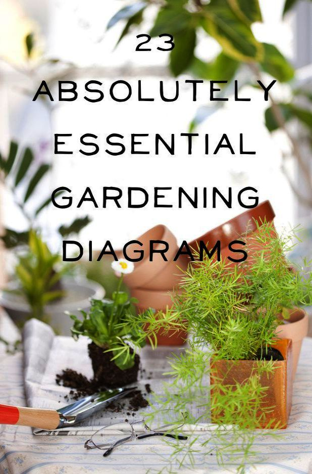 Gardening Tips For Home Gardening Tips Tamil Gardening Tips For Beginners Except Gardening Tips For Sandy Soil Un Plants Gardening Tips Keeping Plants Alive