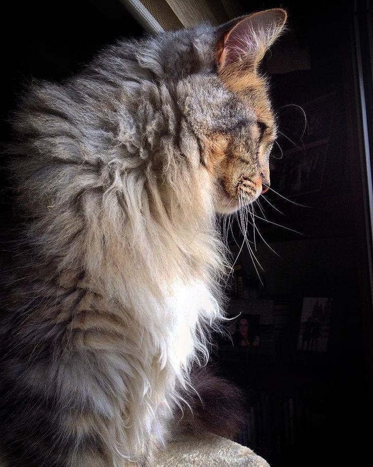 Foto de perfil  #gato #amoamigato #migatoeselmejor #cat #instacat #catsofinstagram #catphotography #ilovecats #ilovemycat #cats #iloveanimals #beautiful by noelia_lake http://www.australiaunwrapped.com/
