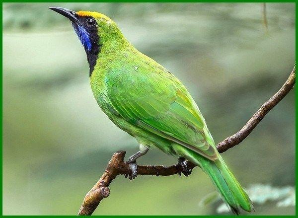 Jenis Burung Yang Dilindungi Beserta Gambarnya Daftarhewan Com Hewan Burung Hewan Peliharaan