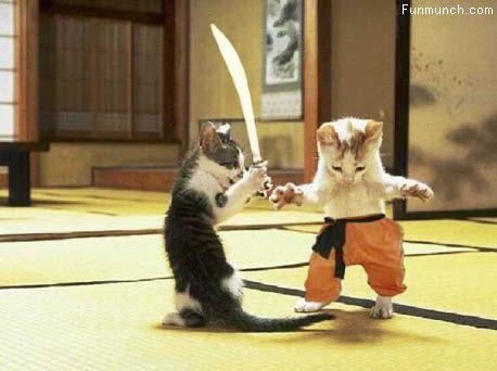 Samurai Kittens