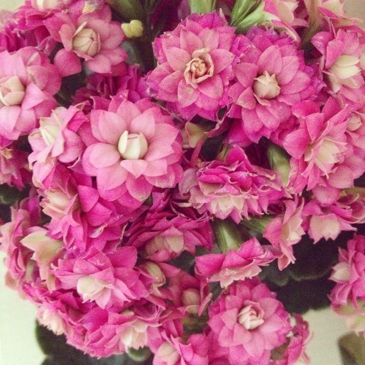 Doğum günü sabahı çiçekleri