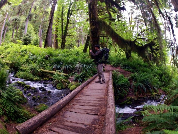 Five easy winter/rainy day hikes on the Olympic Peninsula from Exotic Hikes