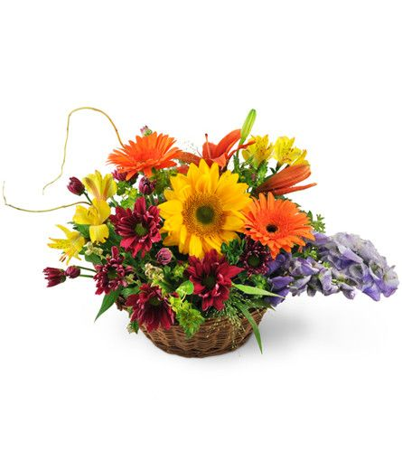 When you want to wish someone the best, send them a Basket of Wishes. This wonderfully bright basket arrangement is the perfect way to send your get-well or sympathy wishes and features gerbera daisies, Asiatic lilies, sunflowers, mums and alstroemeria along with seasonal greens.  Orange Gerbera daisies, sunflowers, and Asiatic lilies are expertly arranged with monkshood, chrysanthemum, alstroemeria, curly willow, and seasonal grasses.