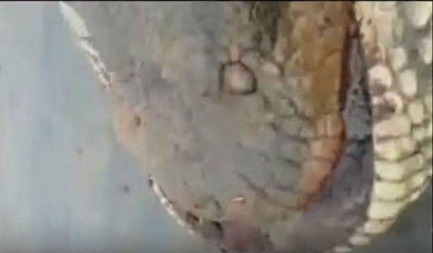 Τεράστιο ανακόντα 400 κιλών ανακαλύφθηκε στη Βραζιλία – ΒΙΝΤΕΟ