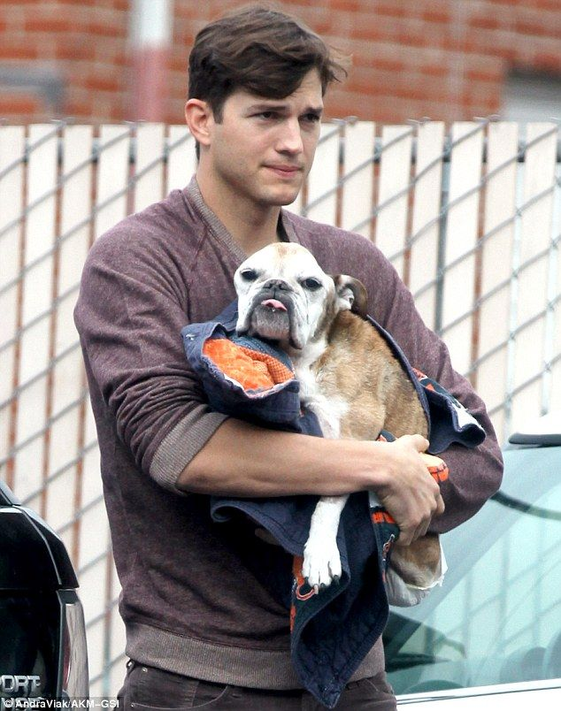 Man's best friend: Ashton Kutcher cradles his sick pooch as he makes his way into a Los Angeles animal hospital on Friday to have it put down