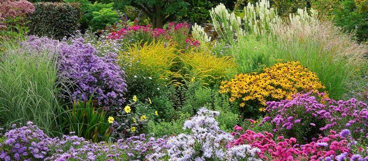 Záhon podzimních aster společně s trávami, třapatkou či krvavcem.