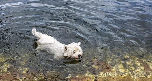 *Making Waves*  Billy isn't as adventurous a swimmer as he used to be, probably because  there aren't many places for dogs to swim around here, but when... - Chris Sutton - Google+