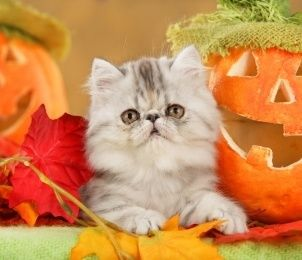 What are some great cat Halloween themed names? We came up with a list of favorites. Check out the most popular cat Halloween names.