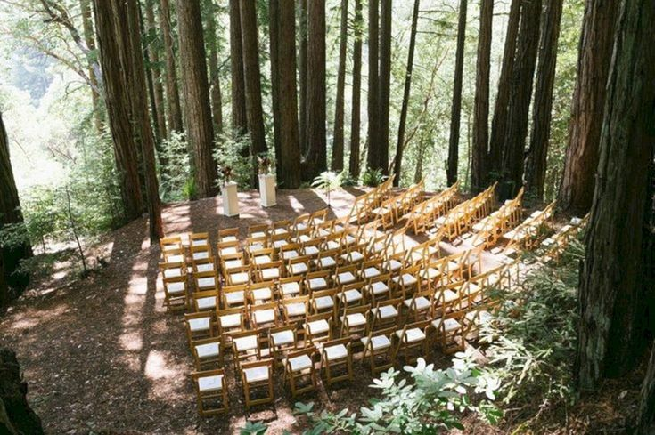 20+ Incredible Redwood Forest Wedding Ideas For Your Romantic Moment