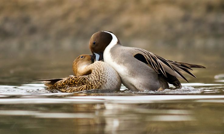 Love by Gianluca Mariani Nature Photographer natura 2.8 on 500px