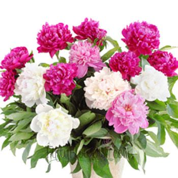 FiftyFlowers.com - Peony Flowers Mixed Colors January Delivery