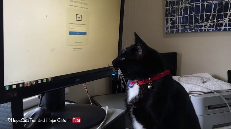 Black Cat watching computer mouse. Princess Mittens loves to help out in the office. See more videos on Hope Cats YouTube