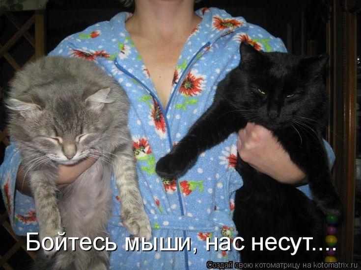 Бойтесь мыши, нас несут.......