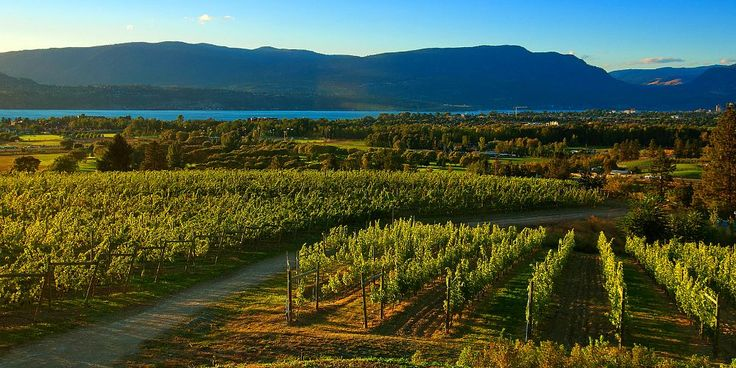 Okanagan winery Tours