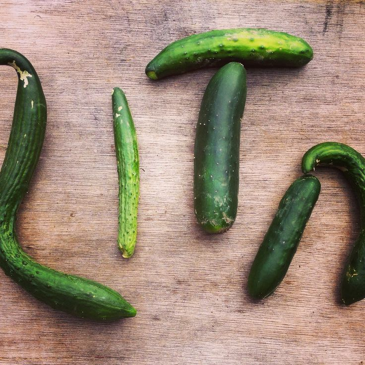 Found these homegrown #Somerset #cucumber on #cycle ride to #Glastonbury that spell my name!