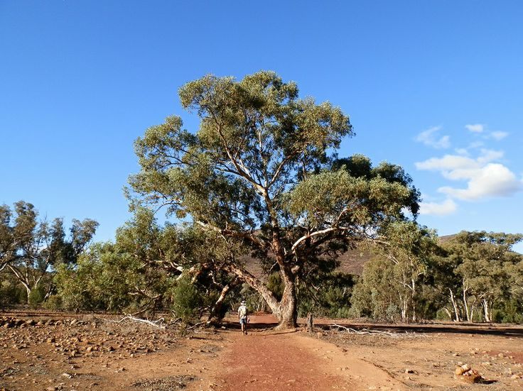 Cross Wilpena Pound to Bridle Gap for some of the BEST Outback scenery in OZ!  South #Australia's hidden secret ...
