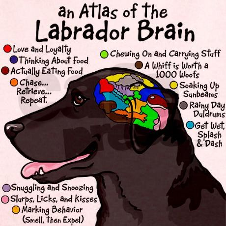 """an Atlas of the Labrador Brain""  ----  [Designed by Illustrator Terry Pond]'h4d'121019"