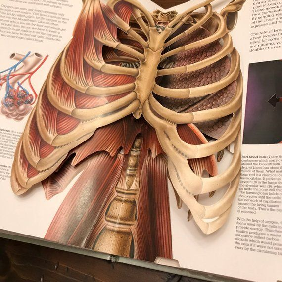 The Human Body Pop Up Book 3d Body Parts Anatomy Book For Kids