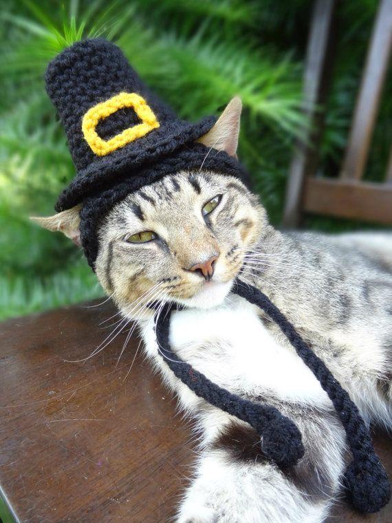Pilgrim Cat Hat - PilgrIm Cat Dog Costume -  The Pilgrim's Cat Hat - Quaker Hat for Cats and Small Dogs - Thanksgiving Costume Pets on Etsy, $18.37 CAD