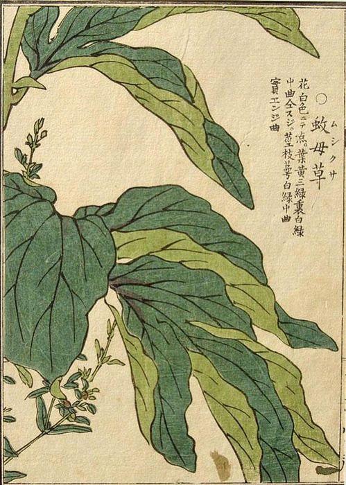 illustration de feuillages : Japon