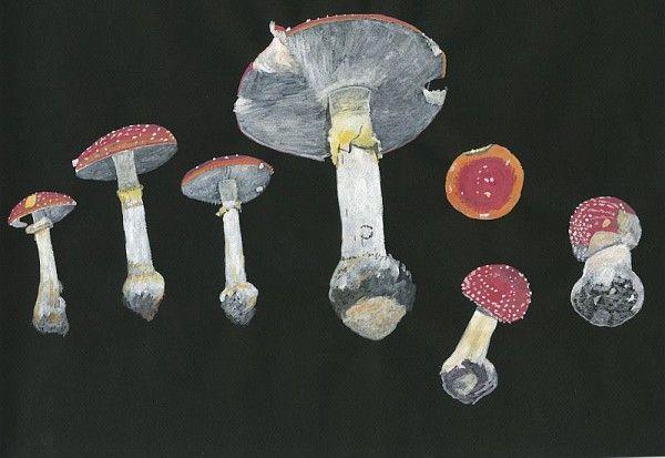 Roger Cans, Amanite tue-mouches, série sur les champignons, gouache sur papier de couleur, 2008 / ©Musée du Vivant - AgroParistech