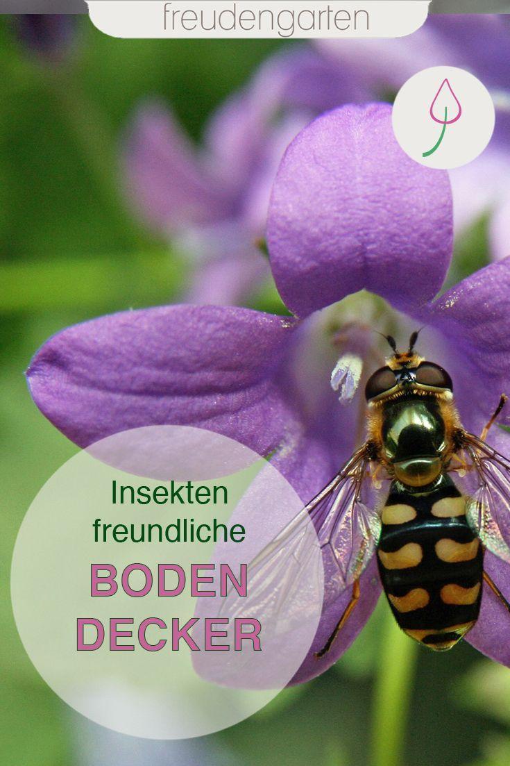 Bienenfreundliche Bodendecker Bodendecker Bienenfreundlicher Garten Bienen