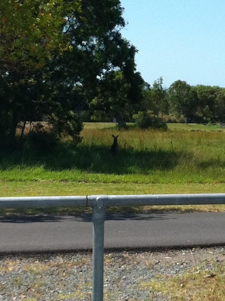 Australia @kangaroo