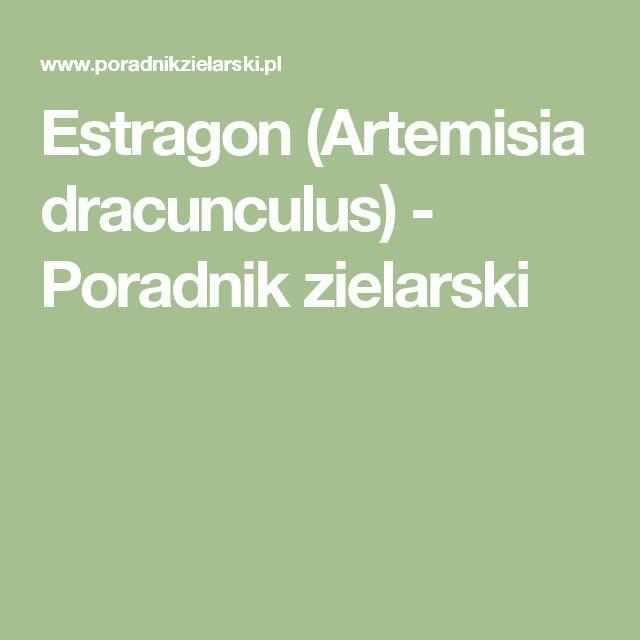 Estragon (Artemisia dracunculus) - Poradnik zielarski
