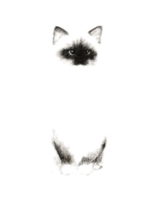 Siamese Cat by Priscilla Moore...my favorite kind of kitty...