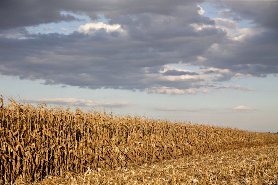 The last time the La Niña weather pattern struck in 2012, corn prices rose to...