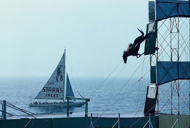 Much Info: The Diving Horses of Atlantic City