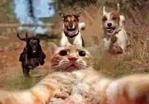 cat taking selfie of being chased by dogs