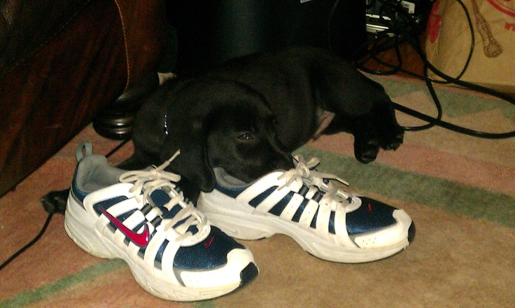 winston finds comfort in my stinky tennis shoes i i