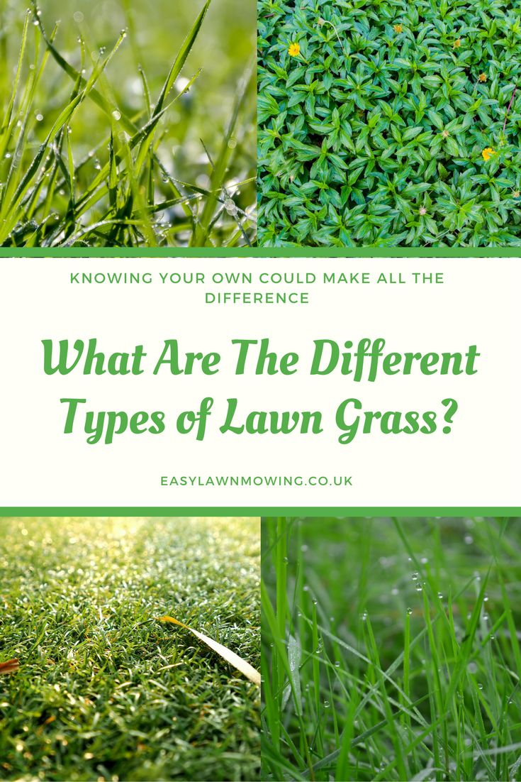 Best 25+ Different types of grass ideas on Pinterest ...