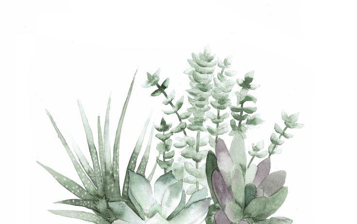 Succulents Garden Jpg 1856 215 1161 Laptop Wallpaper